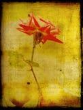 Rose on grunge backdrop Stock Photo