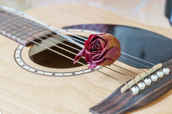 Rose and a guitar Royalty Free Stock Image