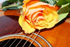 Rose on the guitar strings, symbols. The rose and the strings of the guitar, symbols for love emotions, music and poetry Royalty Free Stock Image