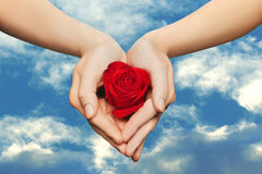 Rose in hand Royalty Free Stock Image