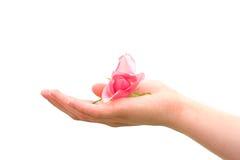 Rose Hand Stock Photo