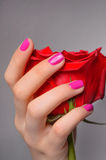 Rose in hand. Close-up of female hand holding a rose against gre Royalty Free Stock Image