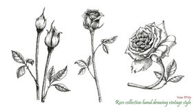 Rose hand drawing engraving style. Rose flowers hand drawing engraving vintage style isolated on white background Royalty Free Stock Images