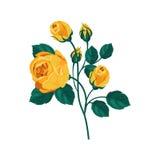 Rose Hand Drawn Realistic Illustration amarilla Foto de archivo libre de regalías