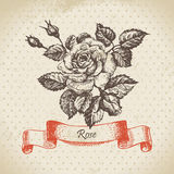 Hand drawn vintage rose Stock Photography