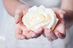 Rose in hands Royalty Free Stock Photography