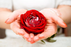 Rose In The Hands Stock Images