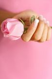 Rose in hands Stock Photos