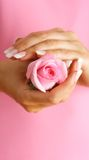 Rose in hands Stock Photography