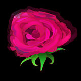 Rose Head Photographie stock libre de droits