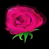 Rose Head Fotografía de archivo libre de regalías