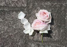 Rose Heads on concrete floor. Rose heads and scattered rose petals lying on a concrete ground Stock Image