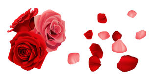Rose heart. Rose with fallen some petals Stock Image