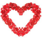 Rose heart Stock Photos