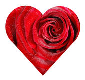 Rose heart Royalty Free Stock Photos