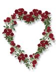 Rose Heart. Photo of red roses arranged digitally in the shape of a heart. On white background. Central space for optional message Stock Image