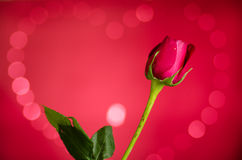 Rose with heart bokeh. Red rose on heart bokeh background Royalty Free Stock Photo