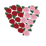Rose heart hand drawn on white background. Red and pink roses in heart shape hand drawn on white background . Valentine day. Idea of textiles, fashion trend Stock Photography