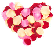 Rose heart Stock Images