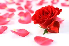 The rose with heart and petals Stock Photo