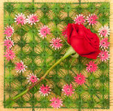 Rose on heart shape symbol Royalty Free Stock Images