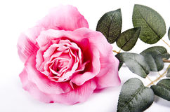 Rose highkey. Artificial flower in closed frame, rose Stock Photo