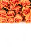 Rose-Hintergrund Lizenzfreies Stockfoto