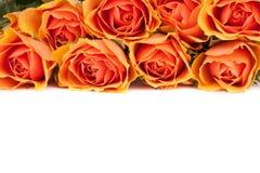 Rose-Hintergrund Stockfotografie