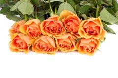Rose-Hintergrund Stockfotos