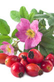 Rose Hip. Berries with flower in the background Royalty Free Stock Image