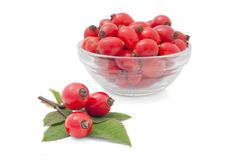 Rose Hip. Bunch of wild rose against the vase with berries Stock Photos