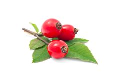 Rose Hip Royalty Free Stock Image