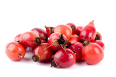 Rose Hip. Close up background Royalty Free Stock Images