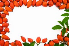 The rose hip background Stock Photos