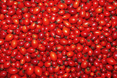 Rose hip Royalty Free Stock Images