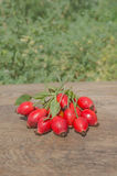 Rose hip berry with leaf Royalty Free Stock Photography
