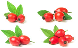 rose hip berry with leaf isolated on white background. Set or co Royalty Free Stock Photo