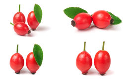 Rose hip berry with leaf isolated on white background. Set or collection Stock Photography