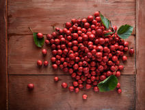 Rose hip. Briar on wooden background Royalty Free Stock Images