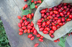 Rose hip fruit in a burlap bag over a wooden background Stock Images