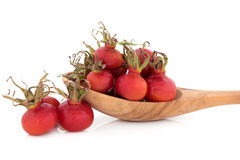 Rose Hip Fruit Royalty Free Stock Photos