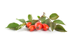 Rose hip isolated Royalty Free Stock Photo