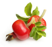 Rose hip isolated Royalty Free Stock Photography