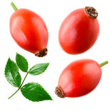 Rose hip isolated on a white. Collection Royalty Free Stock Photos