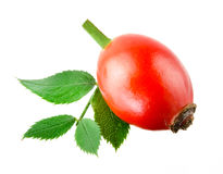 Rose hip with leaf isolated on a white. stock photos