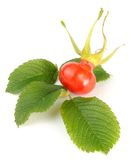 Rose Hip with Leaves Stock Images