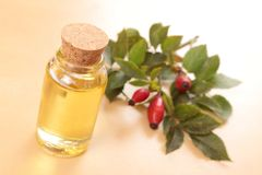 Rose hip oil. And rose fruits Stock Image