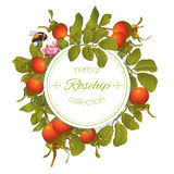 Rose hip round banner. Vector rose hip round banner on white background. Design for tea, homeopathy, herbal cosmetics,health care products. With place for text Stock Photo
