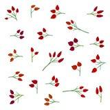 Rose hip set. Set of rose hip branches - illustration Stock Photo