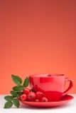 Rose Hip Tea. And fresh rose hips stock photos